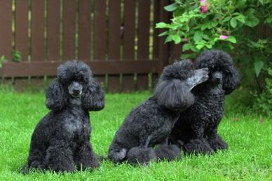Kolme sukupolvea: Melody, Elysia ja Sandy